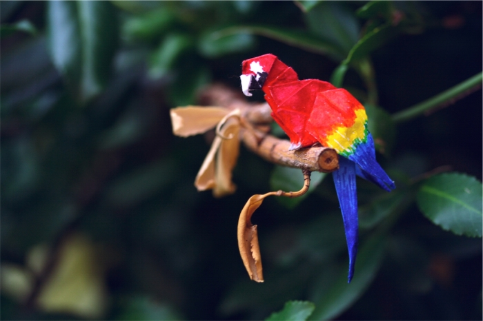 origami scarlet macaw, designed by Gabrielle Chan