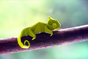 pablito, green origami chameleon, designed by Quentin Trollip