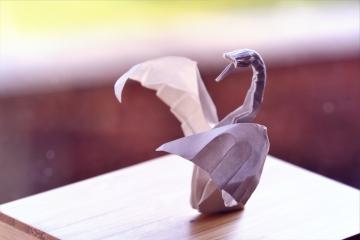 cinquieme en avant, white origami swan, designed by Hoang Tien Quyet