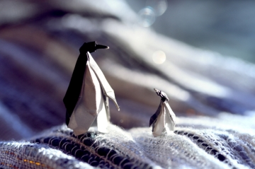 father and son, miniature origami penguins, designed by Eric Joisel