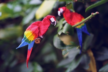 origami scarlet macaws, designed by Gabrielle Chan
