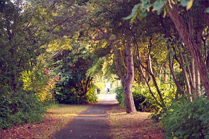a path under the trees in the summer evening light